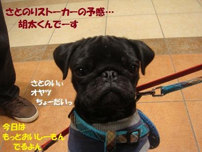 DSC01434_20110621050946.jpg