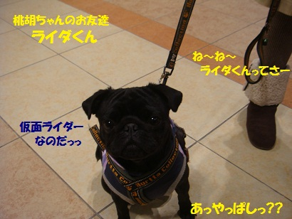 DSC01463_20110621051231.jpg