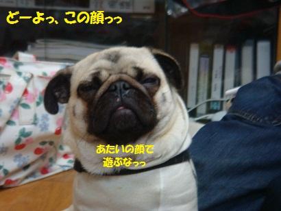 DSC01649_20110629203507.jpg
