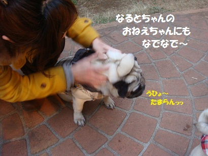 DSC02035_20110627003415.jpg