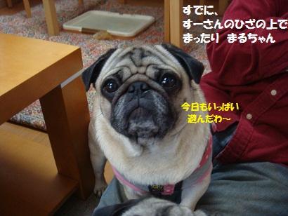 DSC02072_20110718172833.jpg