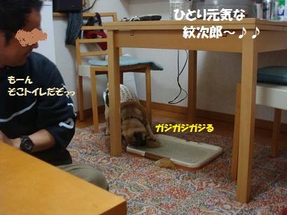 DSC02090_20110718172833.jpg