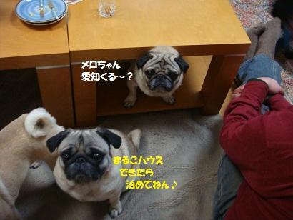 DSC02118_20110718170642.jpg