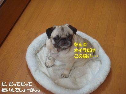 DSC06845.jpg