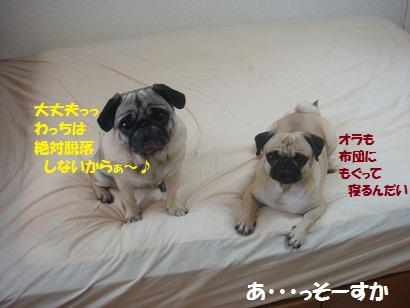 DSC06852_20110604030605.jpg