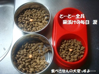 DSC07020_20110606035519.jpg