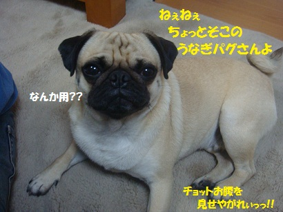 DSC07025_20110606035518.jpg