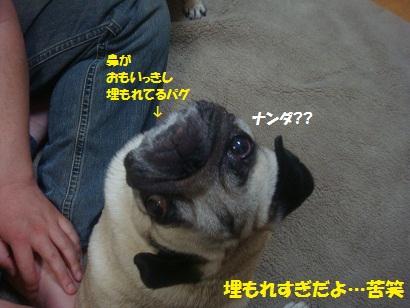 DSC07027.jpg