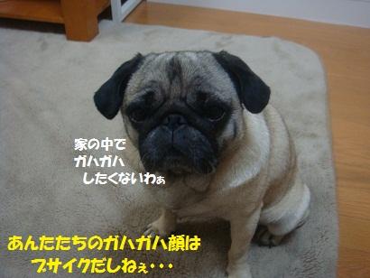 DSC07036.jpg