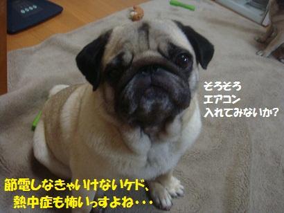 DSC07048_20110606035518.jpg