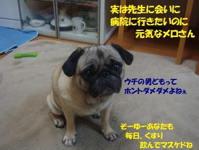 DSC07051_20110606040105.jpg