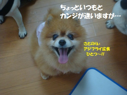 DSC07139_20110626204553.jpg