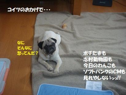 DSC07574_20110708093834.jpg