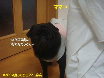 DSC07772.jpg
