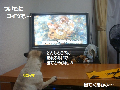 DSC07851_20110708092314.jpg