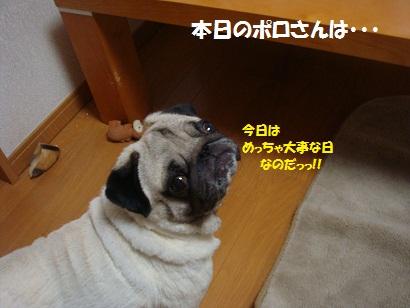 DSC08214_20110707214909.jpg