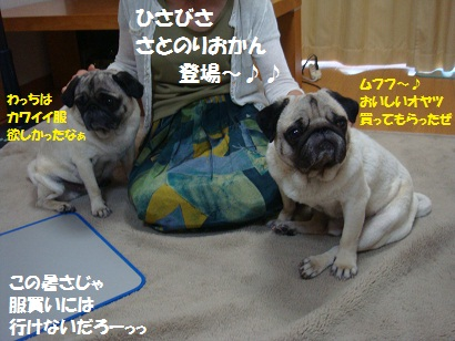 DSC08390.jpg