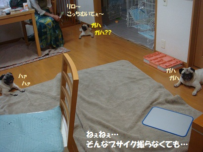 DSC08403_20110718153904.jpg