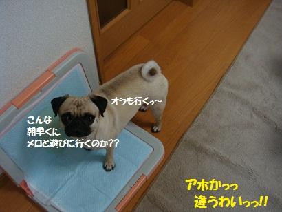 DSC08585_20110718164601.jpg