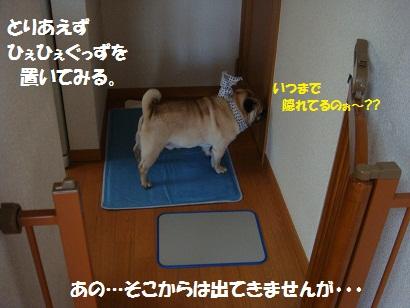 DSC08630.jpg