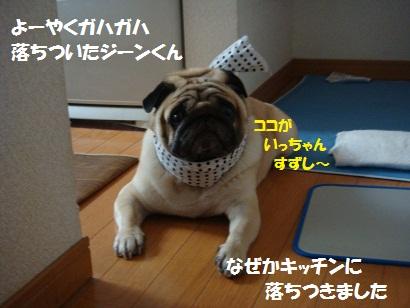 DSC08642.jpg