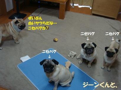 DSC08658_20110720015704.jpg