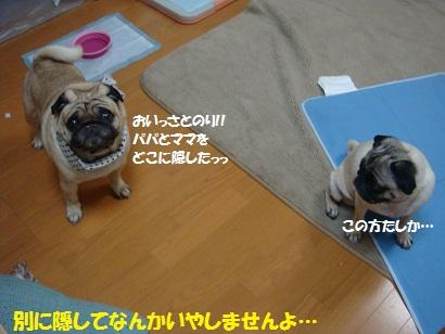 DSC08661_20110720011913.jpg