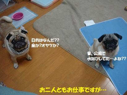 DSC08668_20110720011912.jpg