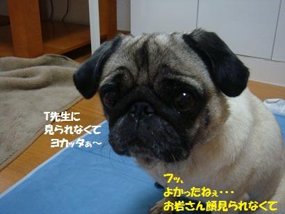 DSC08720.jpg