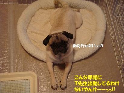 DSC08728_20110718155023.jpg