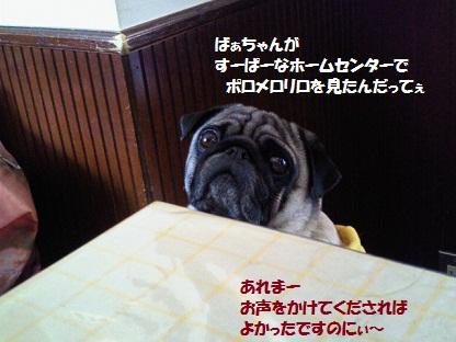 NEC_0008_20110529213408.jpg