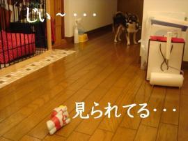 20070104030804.jpg