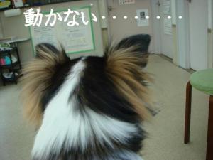 20070111135100.jpg