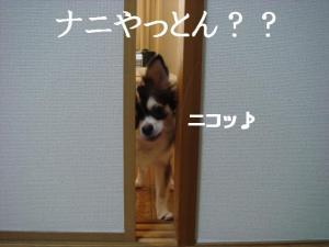 20070113140850.jpg