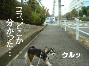 20070119120400.jpg