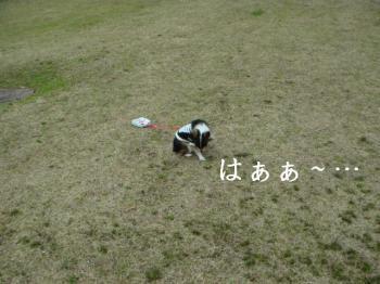 20070224113915.jpg