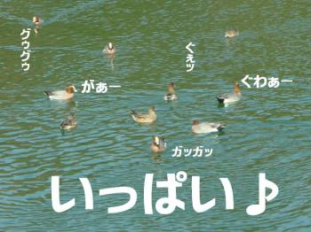 20070310121432.jpg