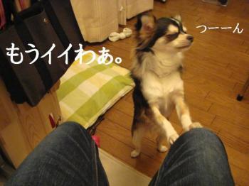 20070404150549.jpg