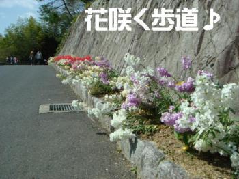 20070405164327.jpg