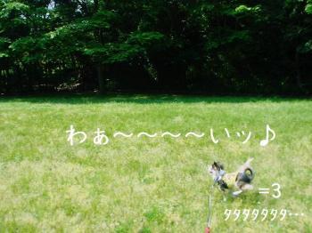 20070526153329.jpg