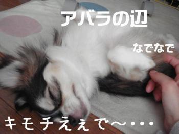 20070627135936.jpg