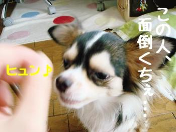 20070912150204.jpg