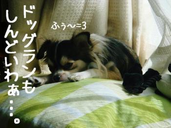 20071029111005.jpg