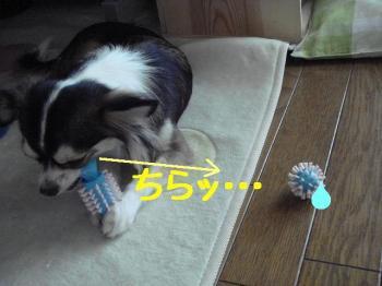 20071104152032.jpg