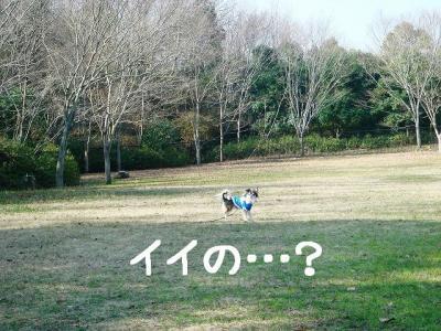 2008011102.jpg