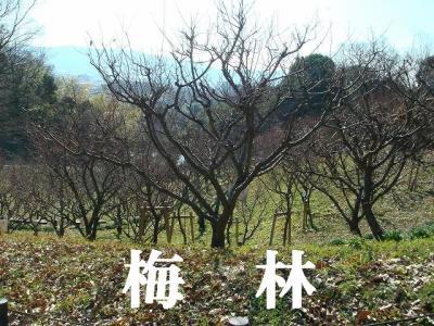 2008012008.jpg