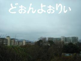 DSC01520.jpg