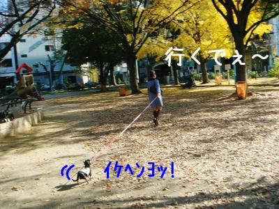 DSC0309006.jpg
