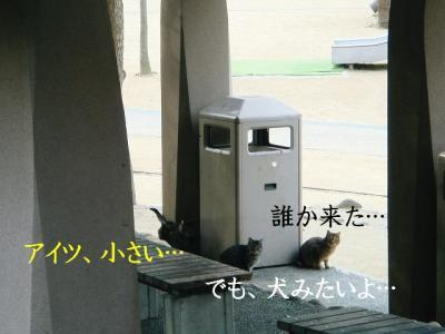 DSC0309319.jpg