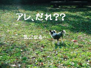 DSC208859.jpg
